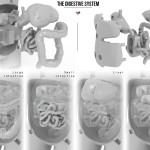 3D Printed Organ Puzzle Parts