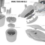 3D Printed Organ Puzzle Part Details