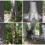 Tree Scans